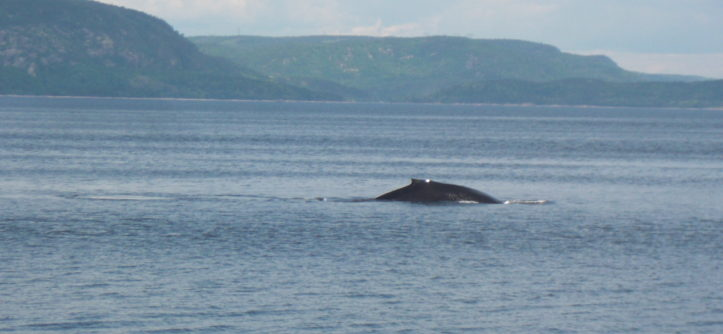 Whale watching Tadoussac Canada