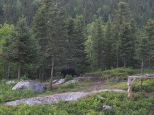 wildlife bears Canada Mauricie Park