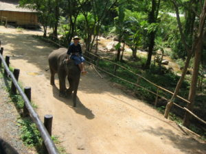 Wildlife Thailand Elephants
